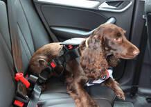 Esodo estivo 2015: Cani e gatti benvenuti negli Autogrill