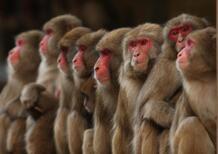 Polemica in Germania: test su animali per le emissioni auto