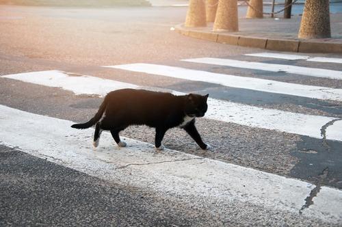 Gatto attraversa strada e auto si ribalta: al volante una suora (4)