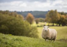 WRC18 Galles. Il silenzio degli innocenti… poi parlano Suninen e Lappi