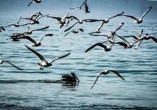 Dakar Rewind. Sud America. Un Viaggio Indimenticabile Durato 10 Anni. Da Paracas a Camanà. Le Isole